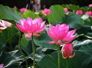 summer-flower vg