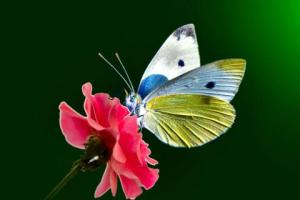 butterfly-yellow-flower-blue-1989-480x320