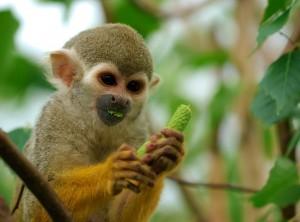 monkey-300x222