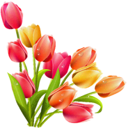 14815anh-thiet-ke-png-hoa-tulip-baby